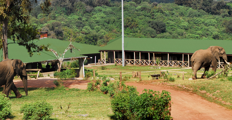 Rhino Lodge, Ngorongoro